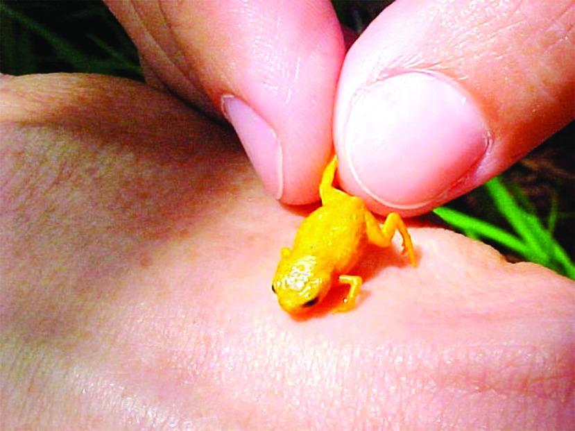 Frogspecies