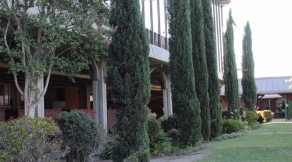 Italian Cypress trees line the west side of the C building. Taken by Leticia Esparza