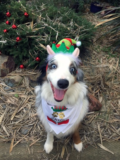 "24-ANIMAL by Timmy Curry ""Dixie the Christmas Elf."""