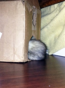 """8-HIDDEN by Saeri Plagmann. """"Folding herself into a burrito, Jade, the ferret sleeps in a handmade cardboard house in the middle of the living room. As an animal that sleeps an average of 18 hours a day, sleep was necessary, regardless of location."""""""